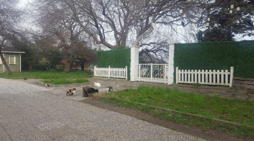 Cats in Kadikoy Fenerbahce Park